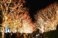 冬の京都・子どもの遊び場20選|私のおすすめランキング