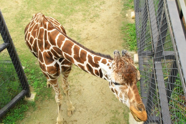 京都市動物園へ行ってきた!