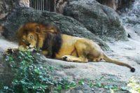 名古屋市の東山動植物園へ行ってきた! お弁当を食べる場所は?水遊びはできる??